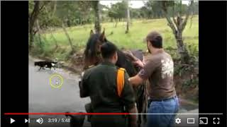 Download Poor Horse Screams For Help - No Stupid Humans Are Listening - Ignorance Is The New Norm In Horses Video