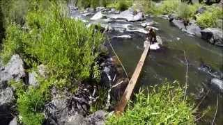 Download Dog Rescued from River....Rescue personnel falls in..... Video