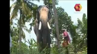 Download E For Elephant Video