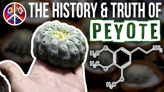 Download PEYOTE | The History & Truth of Mescaline Video