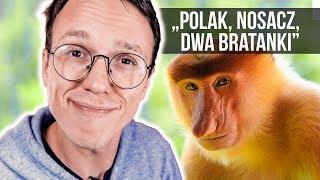 Download Nowe polskie PRZYSŁOWIA Video