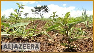 Download 🇧🇷 Planting seeds in Brazil to solve water scarcity problem | Al Jazeera English Video