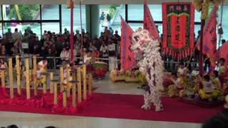 Download Best lion dance show ever! Hong Kong chinese new year 2010 by Sifu Sergio Video