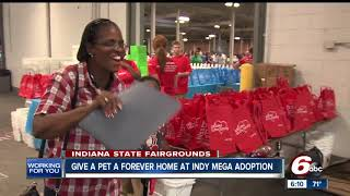 Download Hundreds of pets up for adoption at the Indy Mega-Adoption Event Video