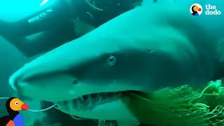 Download Scuba Diving Instructor Saves Shark Trapped In Fishing Net | The Dodo Video