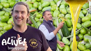 Download Brad Makes Olive Oil (In Italy!) | It's Alive | Bon Appétit Video