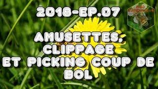 Download Fred l'Apiculteur - 2018 - Ep. 07 Amusettes, clippage et picking coup de bol Video