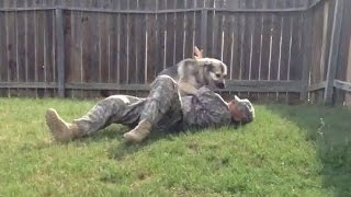 Download Dogs Welcoming Soldiers Home Compilation 2016 [NEW] Video