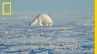 Download The Unsung Heroes of the Arctic - Ep. 3 | Wildlife: The Big Freeze Video