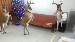 Download Era Rodolfo el reno que tenía la nariz roja Video
