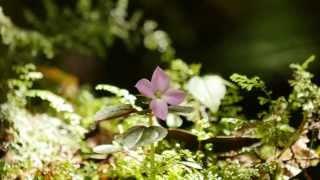 Download 森林中的小精靈 GH4 Video