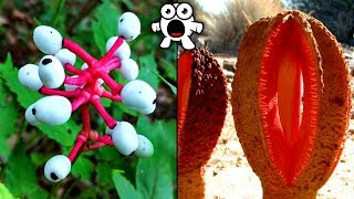 Download Top 20 Most Unusual Plants You Won't Believe Exist Video