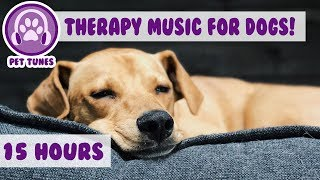Download How to Relax my Dog in my House! New Calming Music Has Helped Over 4 Million Pets - Pet Therapy Video