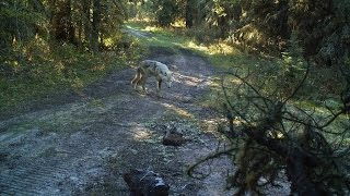 Download Snare cam Video