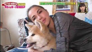 Download Alina Zagitova life with Akita Masaru 秋田犬 勝利 Масару Video