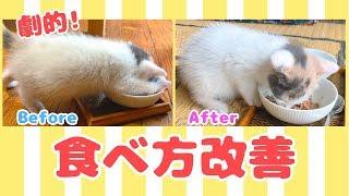 Download ごはんの食べ方が下手な子猫のお行儀改善トレーニング Video