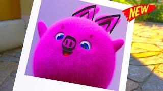 Download Sunny Bunnies Cartoons | The Bunnies Funniest Picture | SUNNY BUNNIES | Funny Cartoons For Children Video