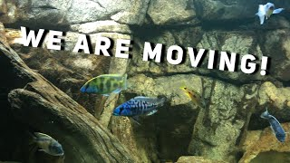 Download BIG FISH PLANS | Jay Wilson Video
