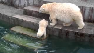 Download Шилка купается. Новосибирск. Зоопарк. Video