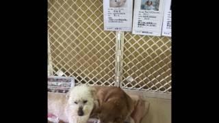 Download 犬猫譲渡センター 里親募集中の仔達 Video
