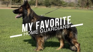 Download BEST DOG BREEDS FOR HOME PROTECTION: NO TRAINING NECESSARY Video