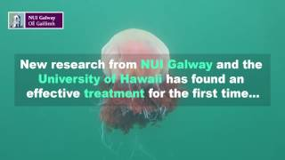 Download The Lion's Mane Jellyfish Video