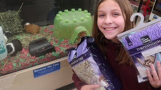 Download Guinea Pig Shopping The Perfect One Video