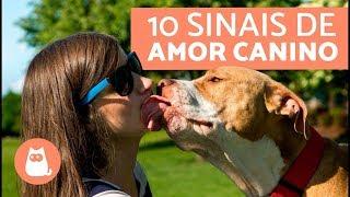 Download 10 sinais de que o seu cachorro te ama Video