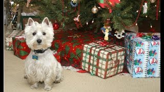 Download Funny Dogs Opening Their Christmas Presents Compilation 2017 Video