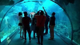 Download Dubai Mall Aquarium and Underwater Zoo 2018 Video