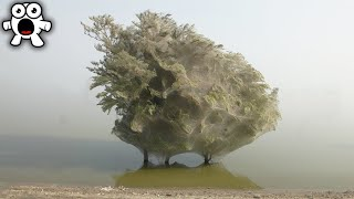 Download Why You'd Run Away From This Ghostly Infested Tree Video