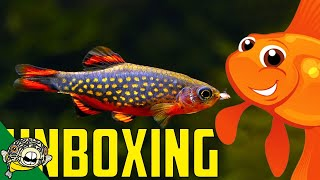 Download A LONG night. They forgot the HEAT PACKS! Fish Unboxing. Video