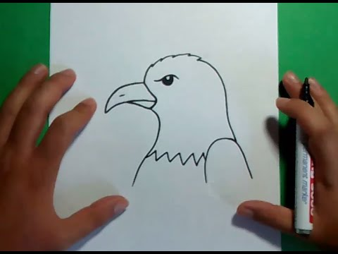 Como dibujar un aguila paso a paso 3 | How to draw an eagle 3