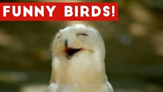 Download Funny Parrot & Bird Videos Weekly Compilation November 2016 | Funny Pet Videos Video