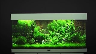 Download Aquarium einrichten JUWEL Rio 180 / Tutorial Video