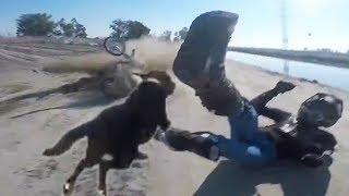 Download Animals Vs Bikers 2018 [Ep.#12] Woof Woof! Meow Meow! Mooooo! Video