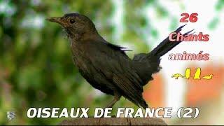 Download CHANTS D'OISEAUX DE FRANCE (2) - Identifier 26 chants d'oiseaux Video