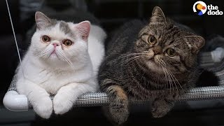 Download Cat Loves His Baby Brother | The Dodo Video