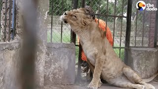 Download Animals Left To STARVE At Zoo Experience Love for the First Time | The Dodo Video