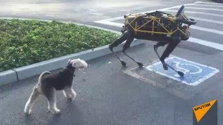 Download Real Dog Meets Boston Dynamics Robot Dog for First Time Video