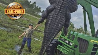 Download RECORD SIZE GIANT ALLIGATOR - Real or Fake? Video