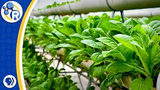 Download Vertical Farming Video