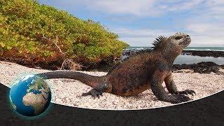 Download From Ecuador to Galápagos Video