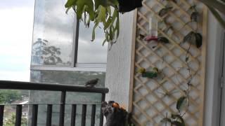 Download Birds of Cali Video
