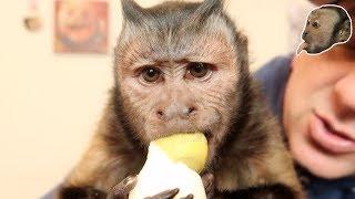 Download SMART Monkey Peels & Eats an Egg! Video