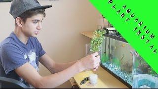 Download Aquarium Plant install ! Video
