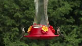 Download How to Set Up Your Hummingbird Feeder from Perky Pet - Ace Hardware Video