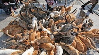 Download Japan's Cat Island - Incredible! Video
