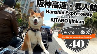 Download サイドカーに柴犬40 [ 阪神高速・神戸空港島 西緑地・異人館 ] The Shiba Inu which rode on the sidecar 40. Video