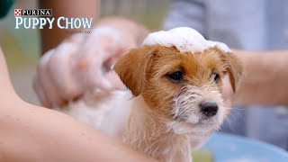 Download When You Walk Your Anxious Puppy // Presented By BuzzFeed & Puppy Chow Video